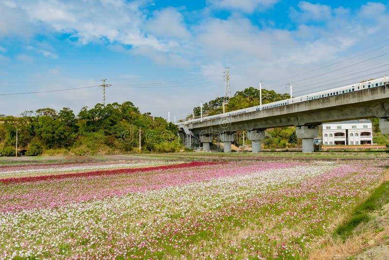 Blomning f?r l?s blomma under den Shanjiao utkikslingan royaltyfri fotografi
