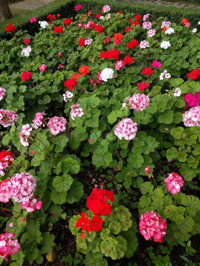 blomning i vårtid royaltyfri foto