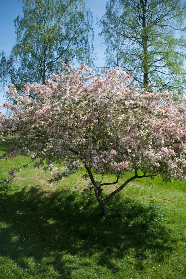 Blomning mellan träden royaltyfri fotografi
