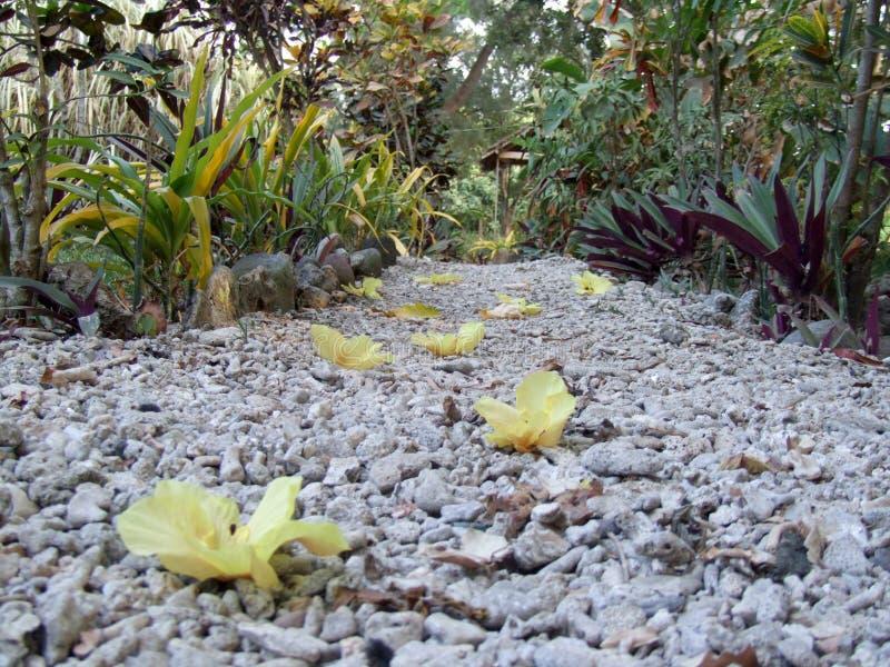 Blomning på en kiselstenbana arkivfoto