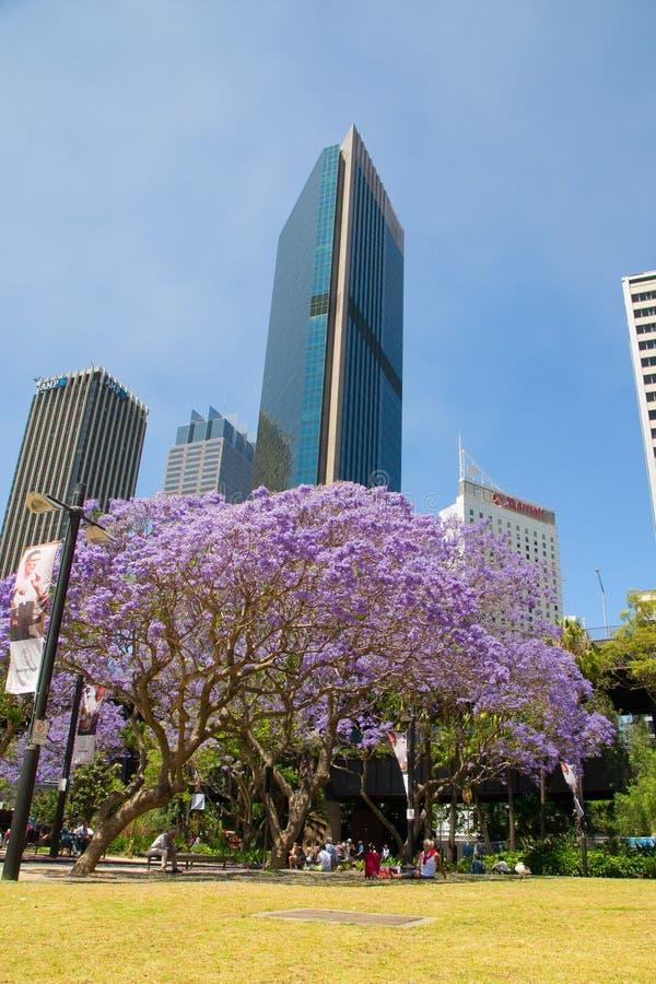 Blomning Sydney arkivfoton