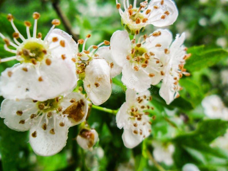 Blomning under våren royaltyfria bilder