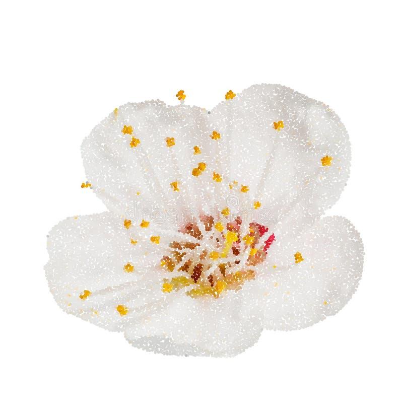 Blomningar för vårblommaäpple blommade isolerat på vit, väg i bana Stil för vektorillustrationpunkt vektor illustrationer