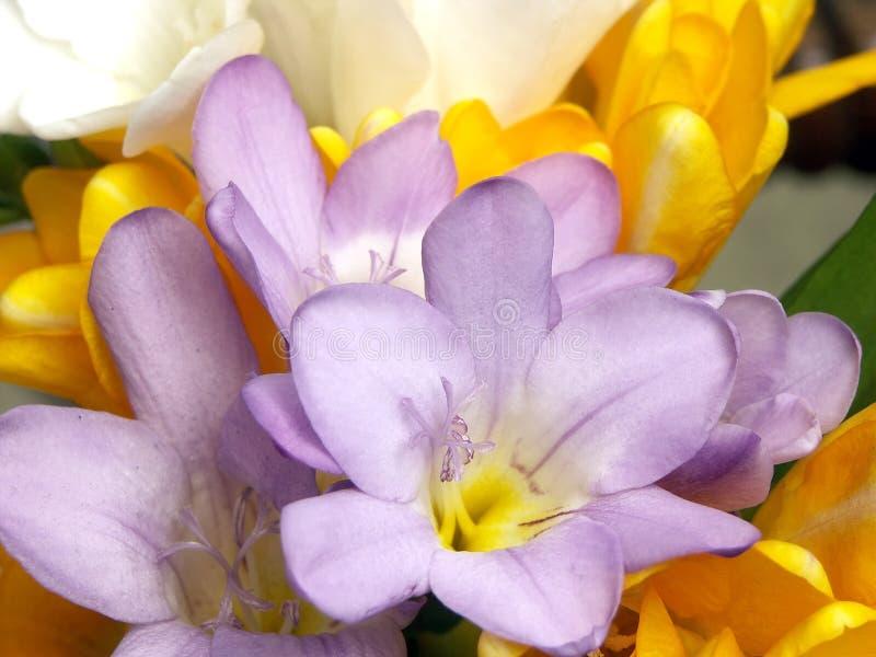 blomningblommor royaltyfri bild