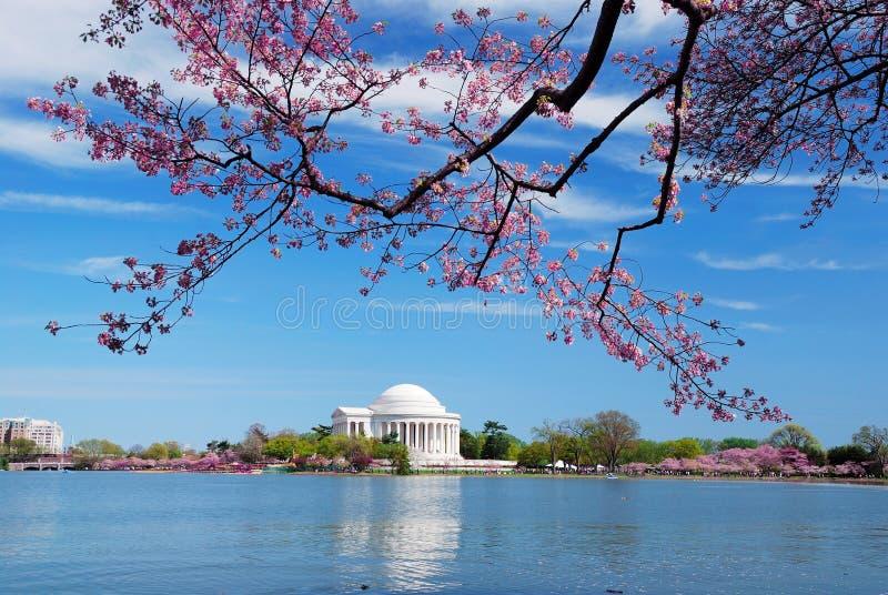 blomningCherrydc washington royaltyfri fotografi