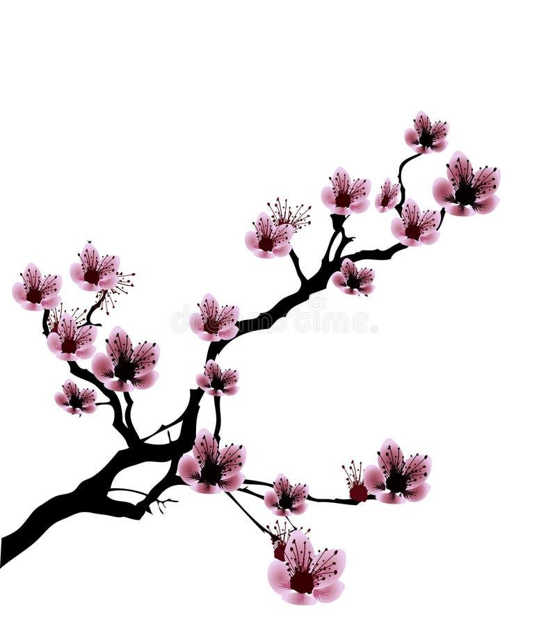 blomningCherryillustration vektor illustrationer