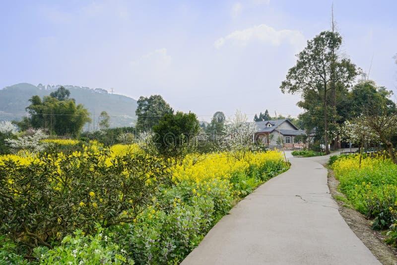 Blomningcountryroad till byn i solig vår royaltyfria bilder