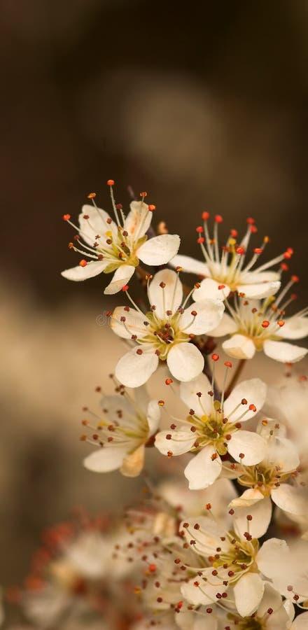 blomningfjädertree royaltyfri foto