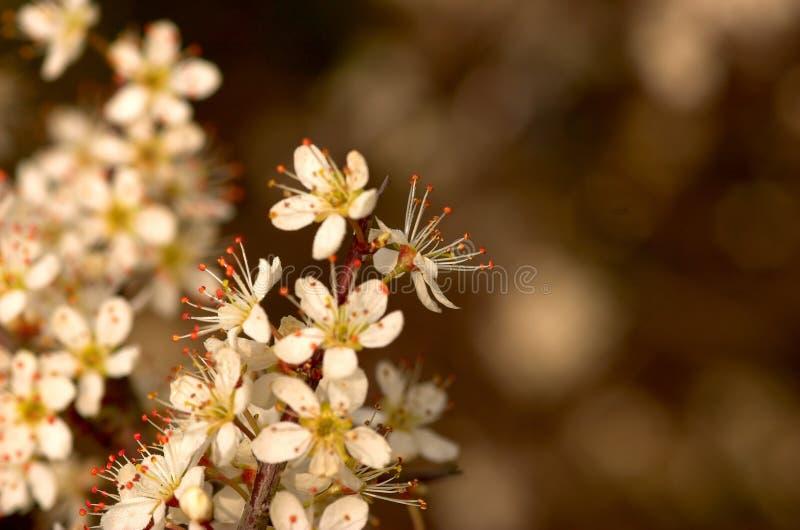 blomningfjädertree arkivbild