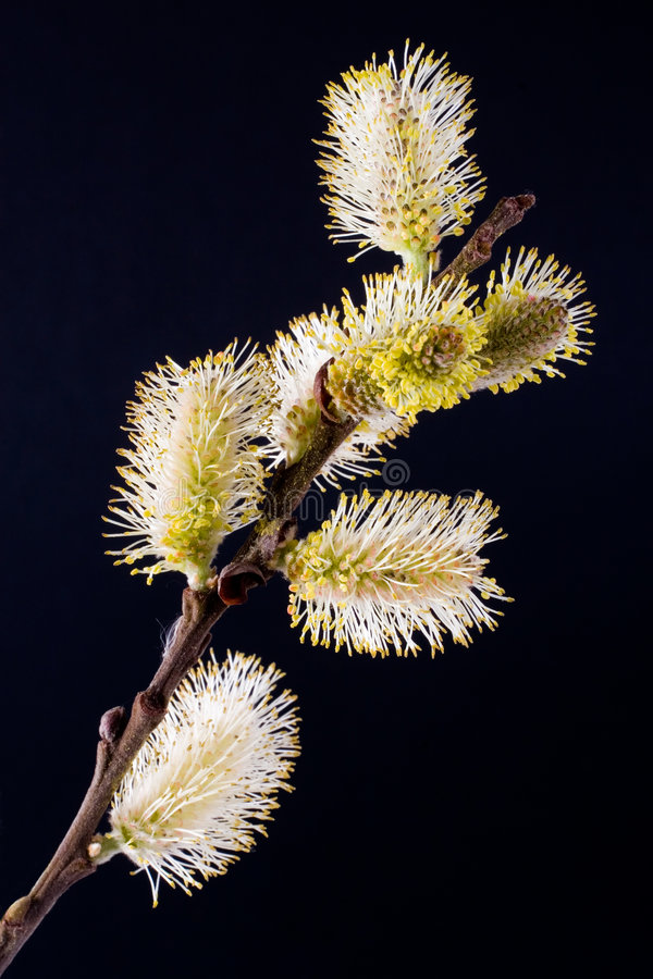 blomninggetpil arkivfoton