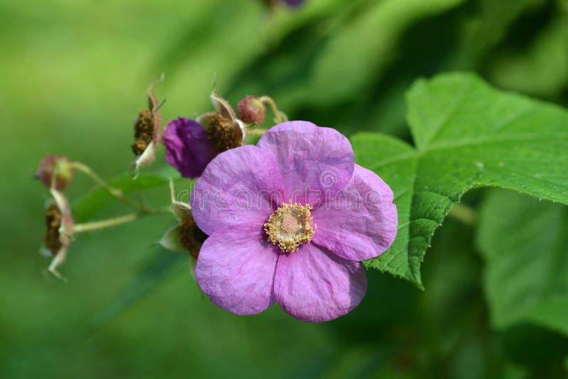 Blomninghallon royaltyfria foton