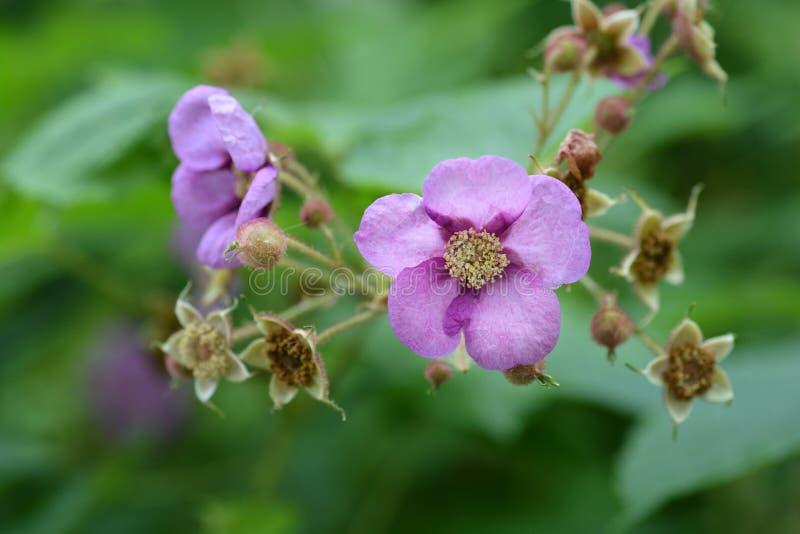 Blomninghallon fotografering för bildbyråer