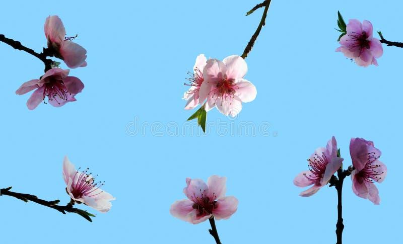 Download Blomningpersika arkivfoto. Bild av cherry, säsong, börjar - 504018