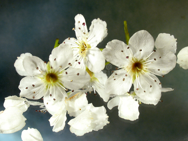 blomningreflexioner royaltyfria foton