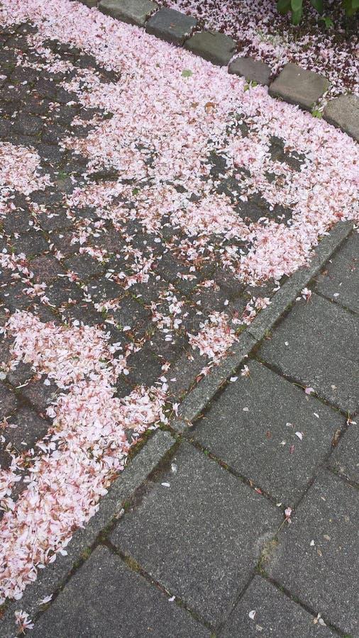 Blomningsidor på jordningen royaltyfria bilder