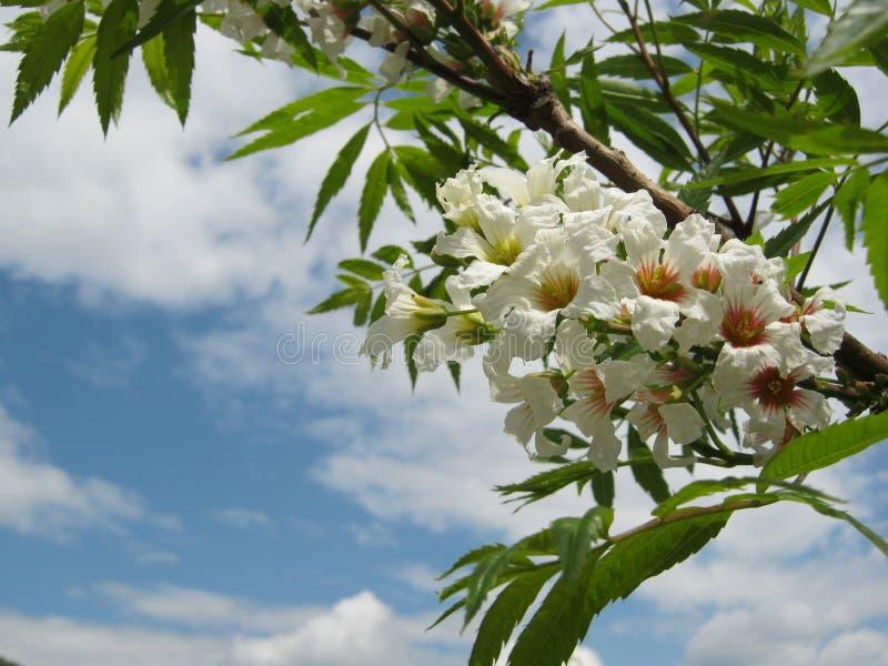 Blomningträd över naturbakgrund royaltyfri fotografi