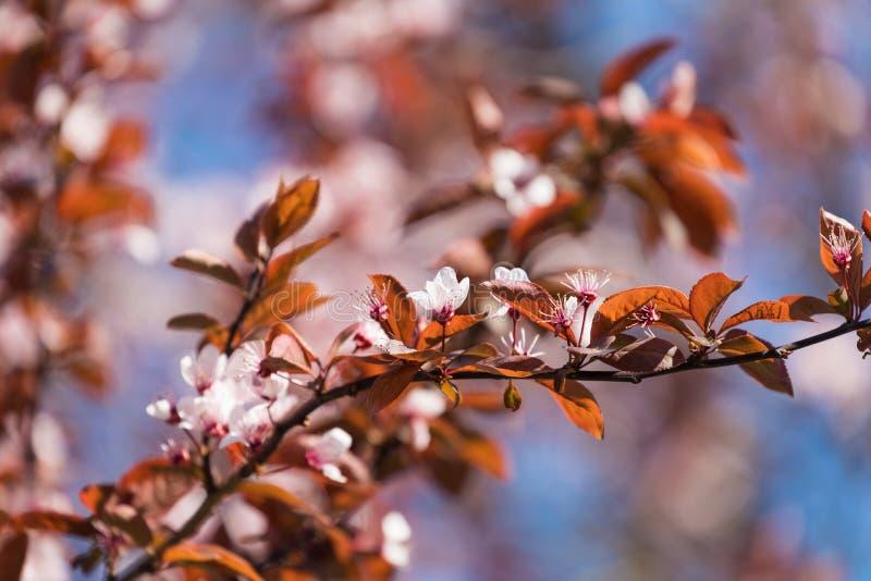 Blomningträd över naturbakgrund just rained Vår tillbaka fotografering för bildbyråer