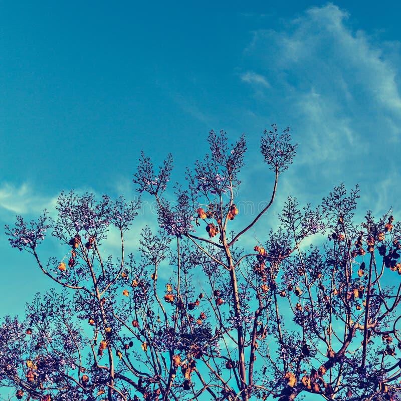 Blomningträd mot himlen arkivfoton