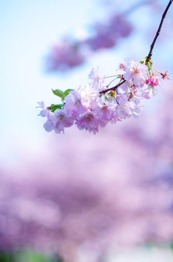 Blomningträd och blommor i en parkera Härlig vårnatursikt med folk Träd och solljus Plats av den soliga dagen Naturlig bac royaltyfria bilder