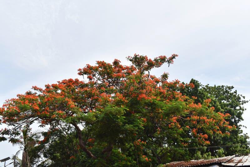 Blomningtr?d och himmel arkivbild