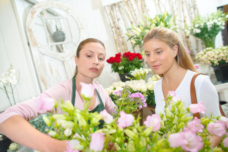 Blomsterhandlare som väljer rosor för kund fotografering för bildbyråer