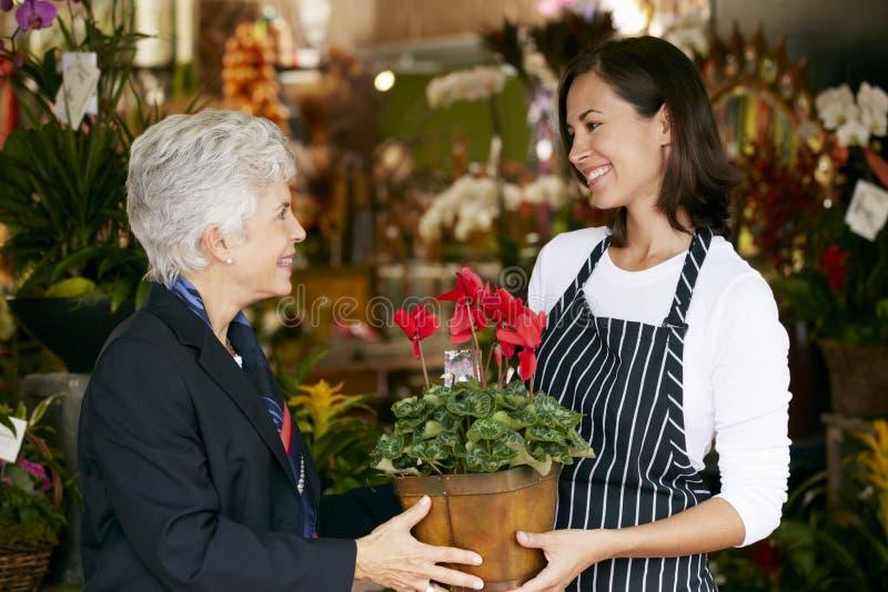 BlomsterhandlareHelping Senior Female kund som väljer växten arkivbild
