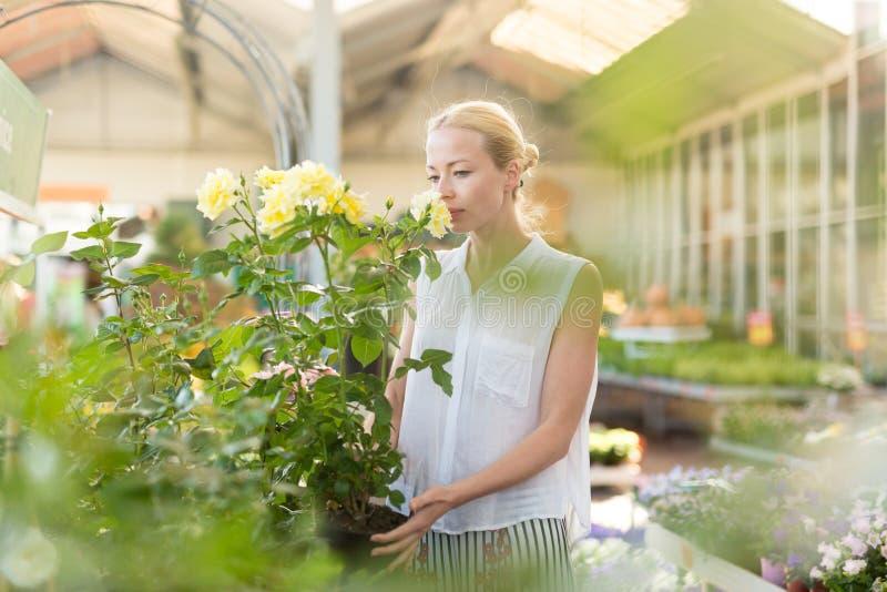 Blomsterhandlarekvinna som arbetar med blommor på växthuset royaltyfri fotografi