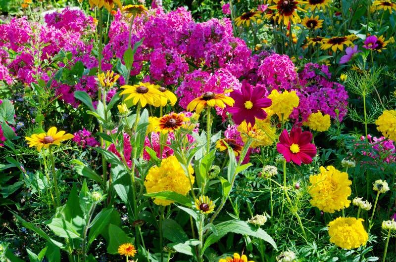 Blomsterrabatt med färgrika trädgårds- blommor fotografering för bildbyråer