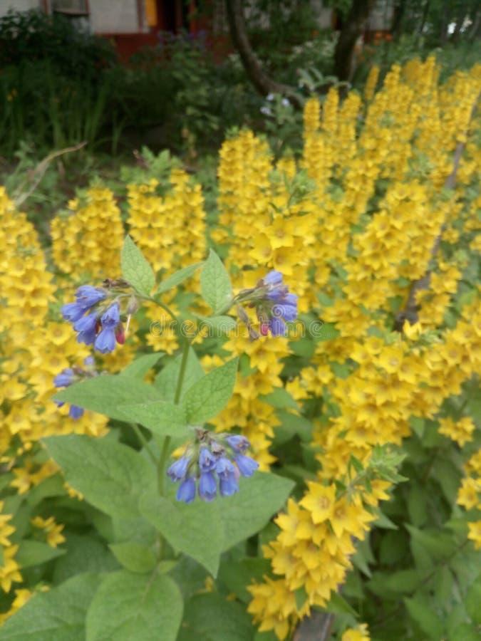 Blomsterrabatt med gula blåa och andra blommor arkivfoton