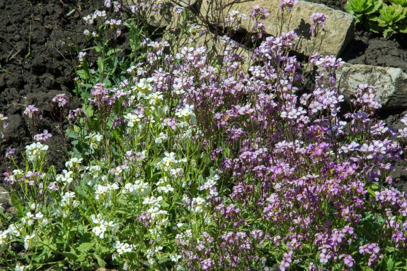 blomsterrabattblommor Planterad säng för blommaträdgård i form av A.C. royaltyfria bilder