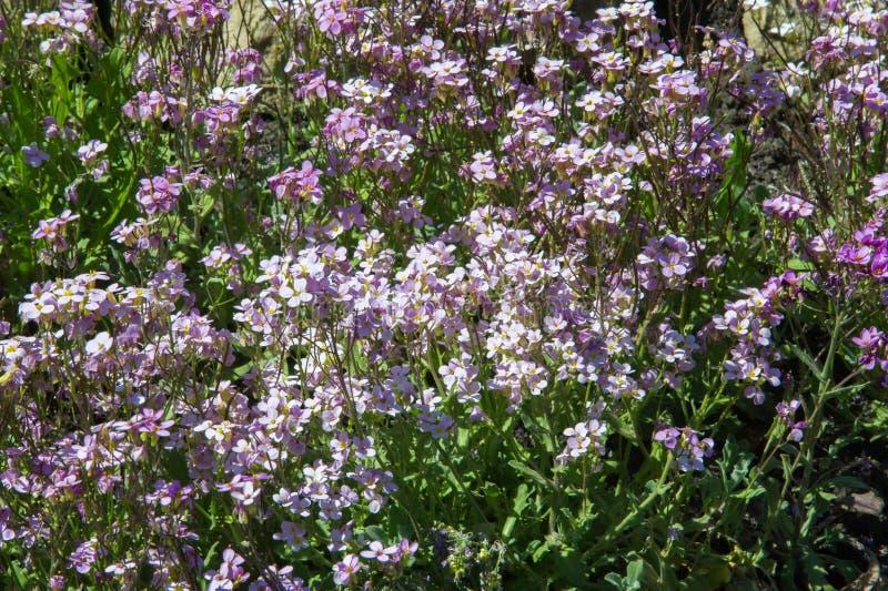 blomsterrabattblommor Planterad säng för blommaträdgård i form av A.C. arkivbild