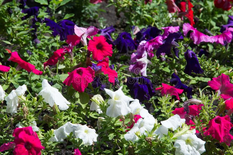 blomsterrabattblommor Planterad säng för blommaträdgård i form av A.C. royaltyfri bild