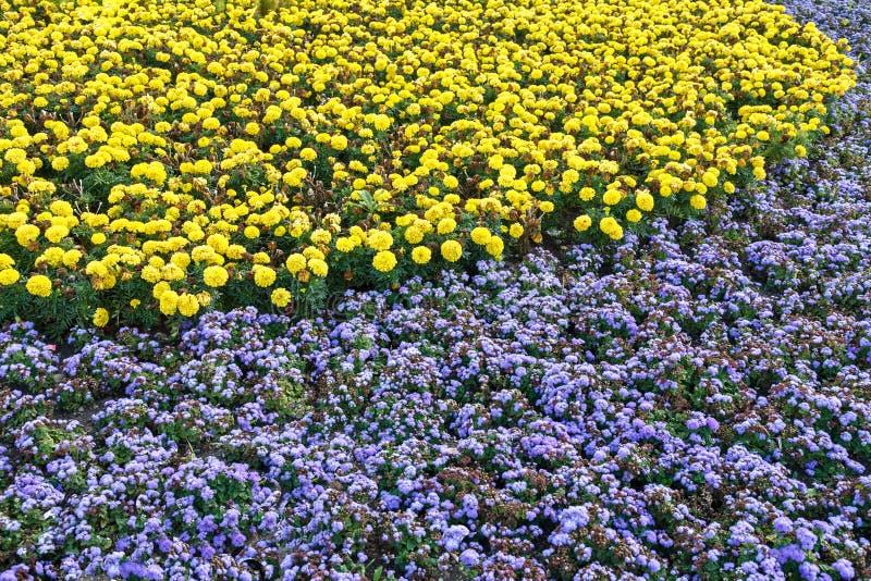 blomsterrabatten royaltyfria foton