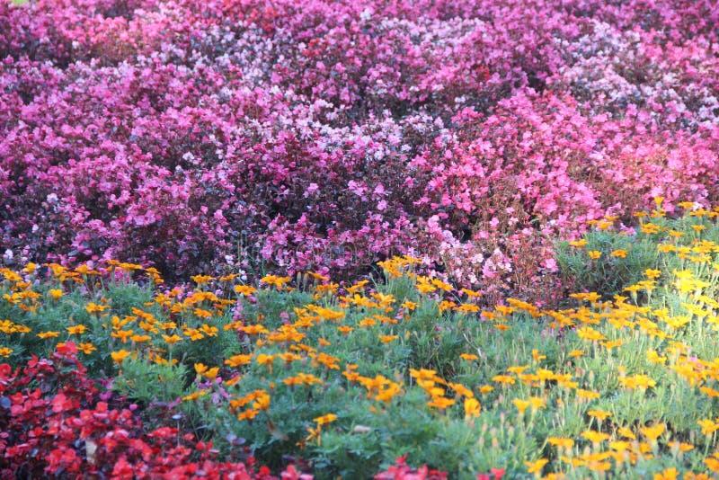 blomsterrabatten royaltyfri fotografi