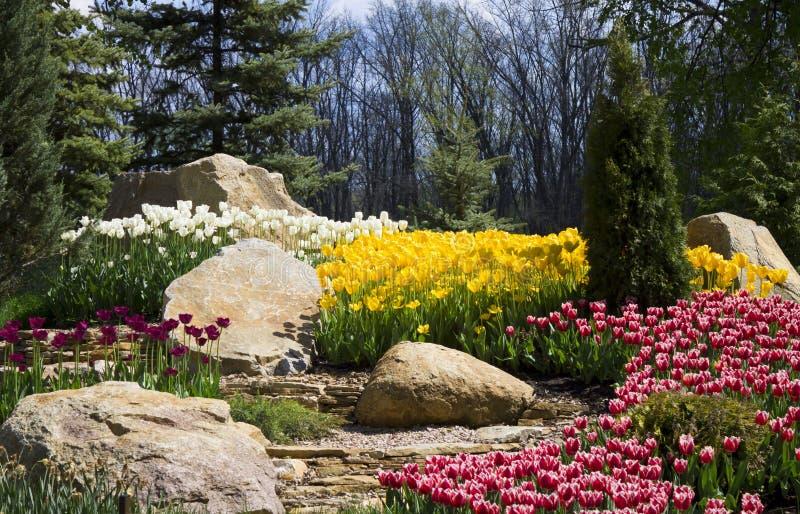 Blomsterrabatten med blommor, vit, guling, röda tulpan, vaggar och grönt gräs arkivbilder