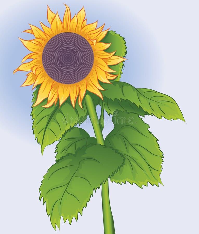 Blomstra blommasolrosen royaltyfri illustrationer