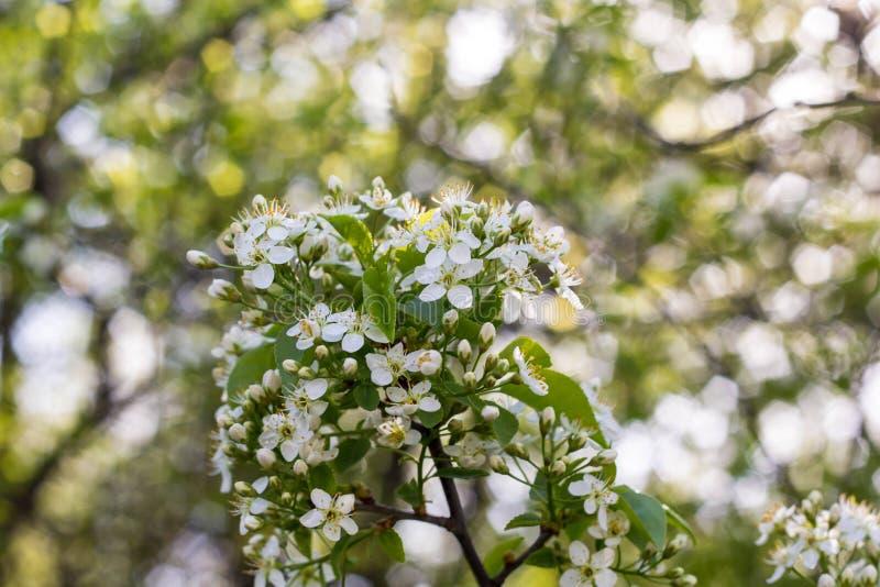 blomstra blommatreewhite royaltyfri fotografi