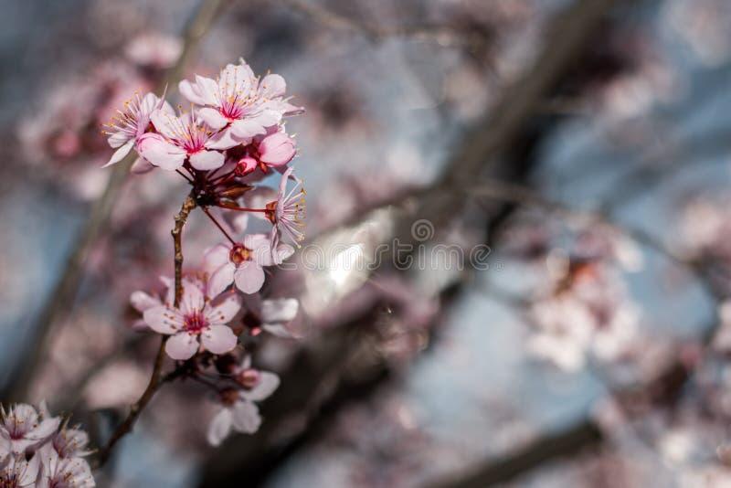 blomstra blommor fotografering för bildbyråer