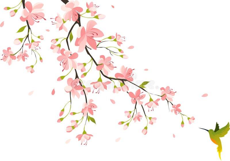 blomstra Cherryet stock illustrationer