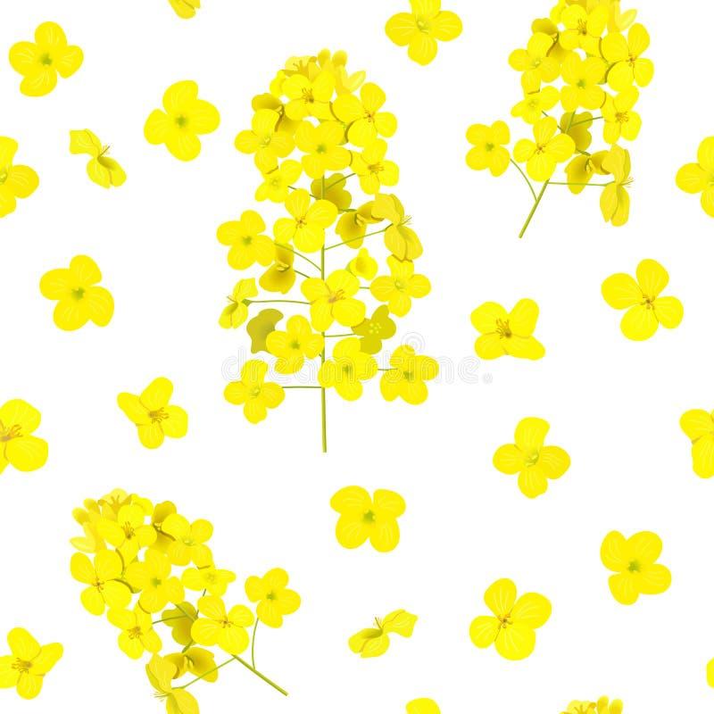 Blomstra den isolerade sömlösa modellen för rapsfrö Canola eller rapsfr? Brassicanapus Att blomma v?ldtar gula blommor V?r royaltyfri illustrationer