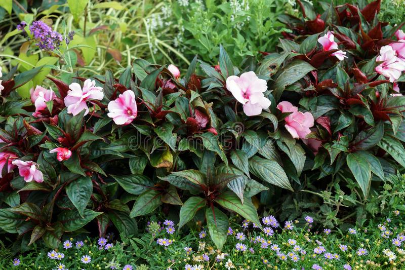 Blomstra f?rgrika blomsterrabatter i sommarstad parkera arkivfoto