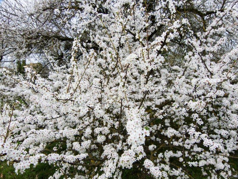 blomstra fjädertrees arkivfoton