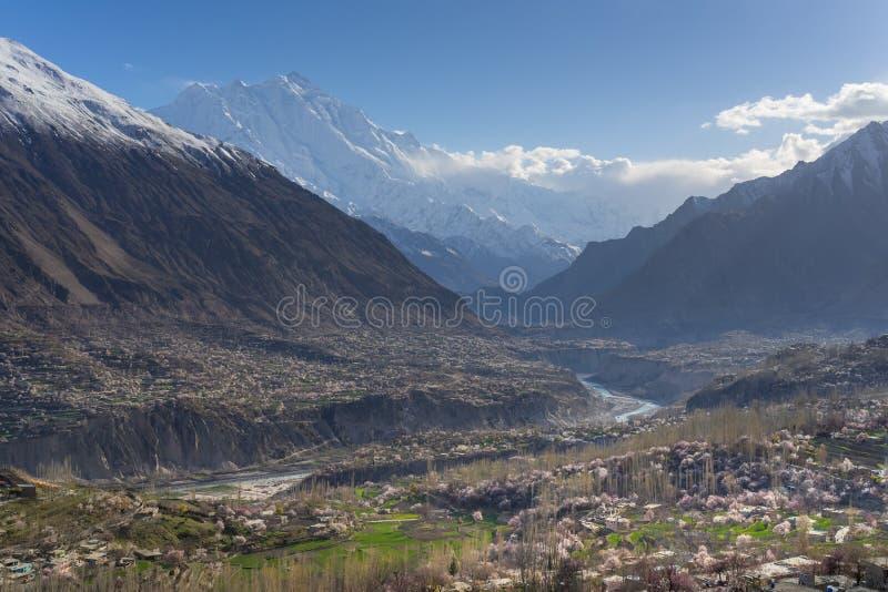 Blomstra i den Hunza dalen med Rakaposhi bakgrund, Gilgit Baltis arkivfoton