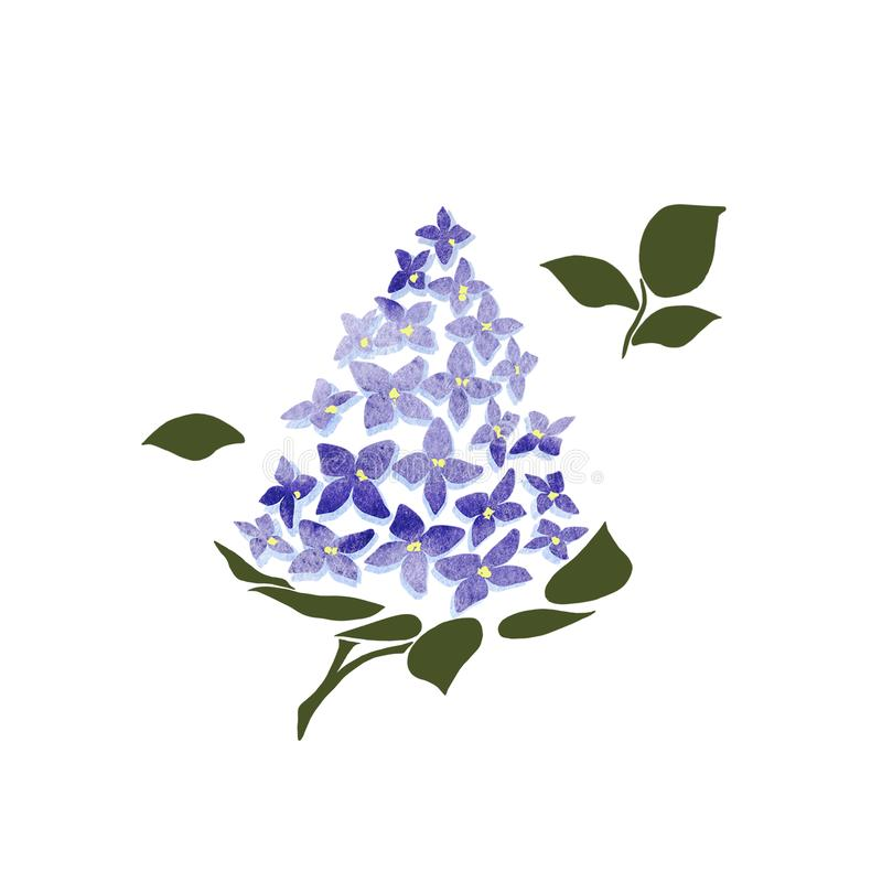 Blomstra lilan p? vit bakgrund Lila filialblommateckning, illustration vektor illustrationer