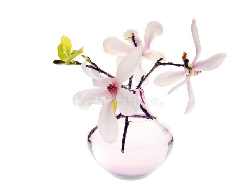 blomstra magnoliafjädern arkivfoton