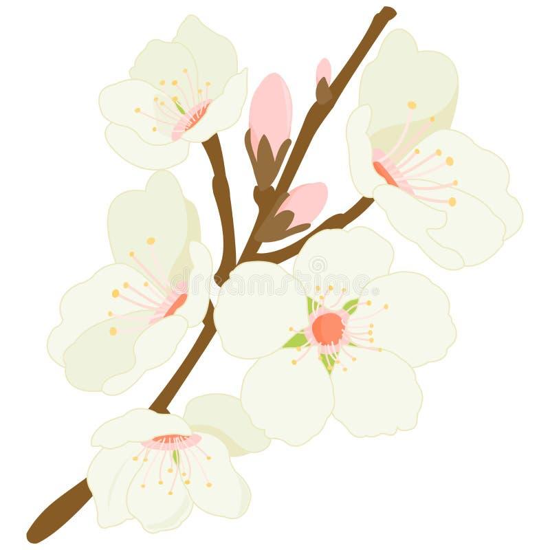 Blomstra mandelträdfilialen med blommor vektor illustrationer
