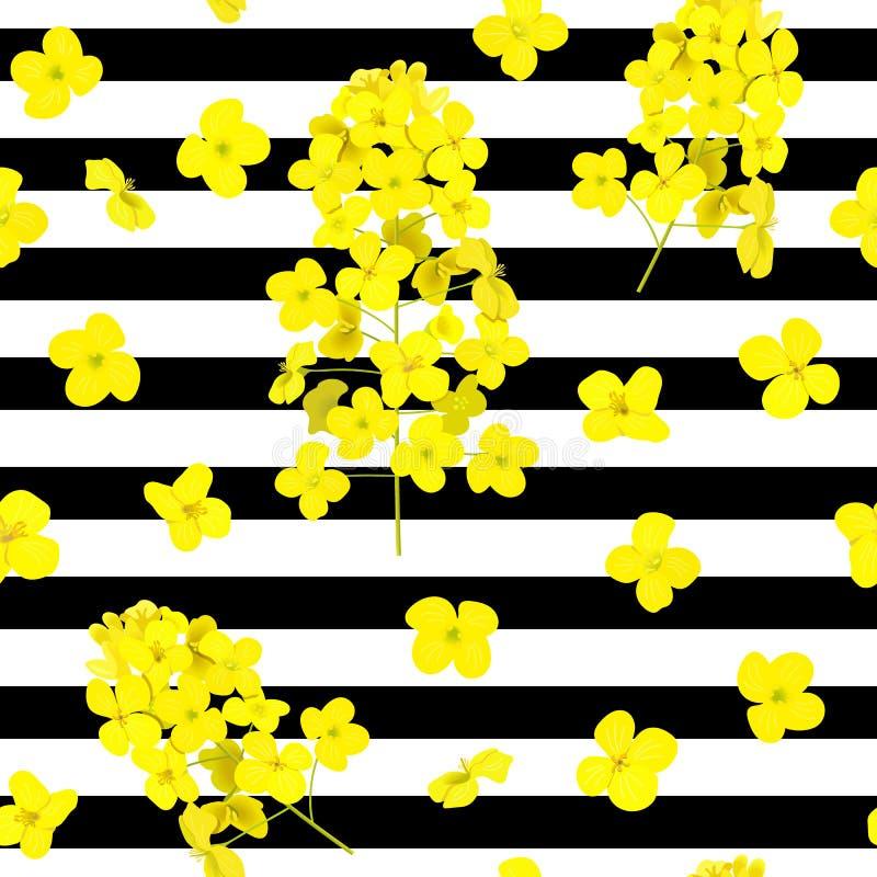 Blomstra modellen för vektor för rapsfröblommor den sömlösa på randig svartvit bakgrund Sommartryck F?r textil royaltyfri illustrationer