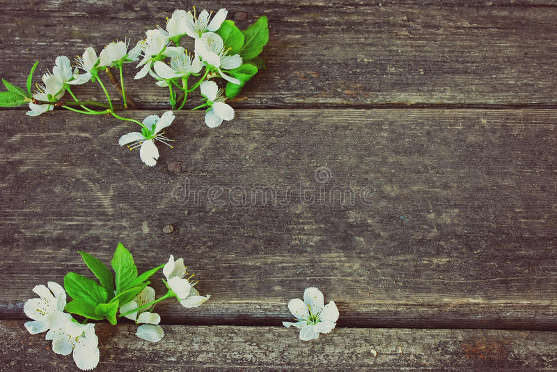 Blomstra plommonfilialen arkivfoton