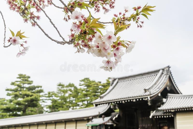 Blomstra träd i vår på Kyoto den imperialistiska slotten, Japan royaltyfri foto