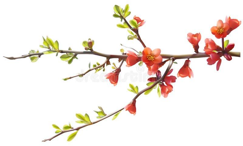 blomstra tree vektor illustrationer